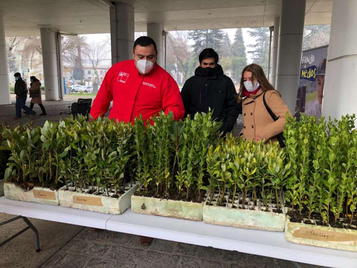 Corma dona 500 árboles nativos a Bomberos y juntas de vecinos de Ñuble