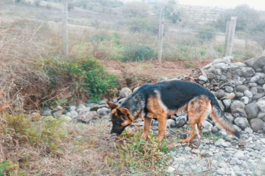 Ex concejal de San Rafael por disparos a perro: